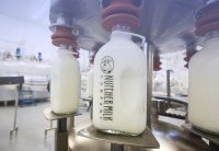 Bottle of Nutcher Milk Company eing filled with milk through production line